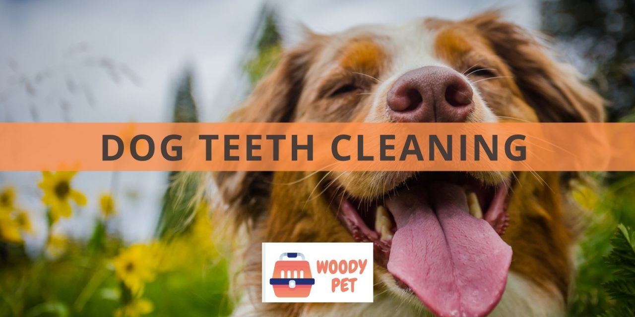 Dog Teeth Cleaning: What You Need to Know