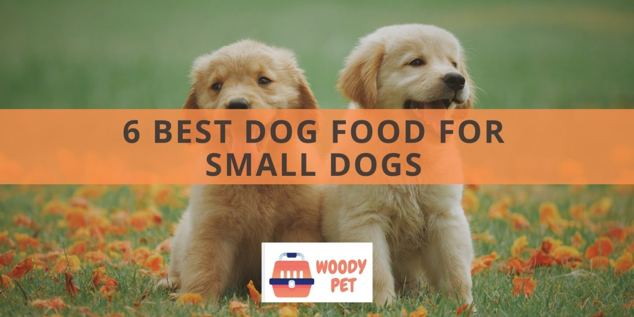 6 Best Dog Food for Small Dogs