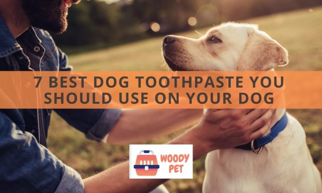 7 Best Dog Toothpaste You Should Use On Your Dog