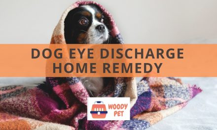 Dog Eye Discharge Home Remedy
