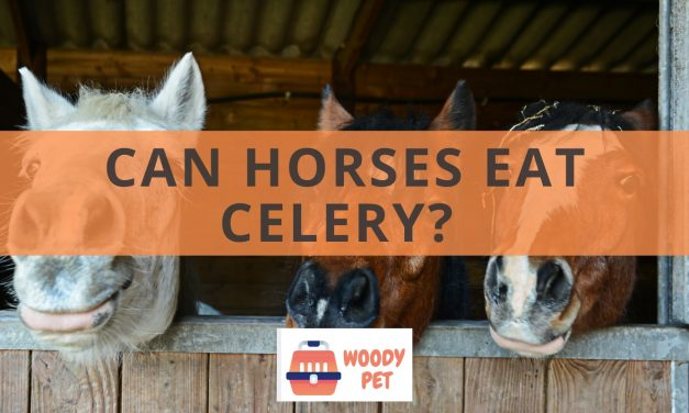 Can horses eat celery?