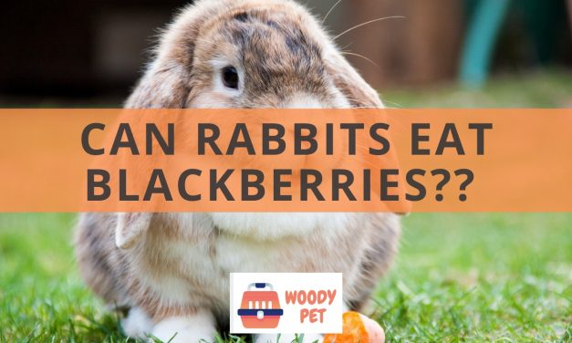 Can Rabbits Eat Blackberries?