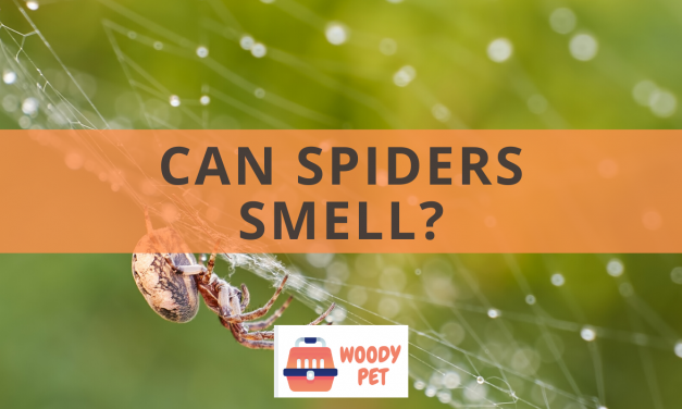 Can Spiders Smell?