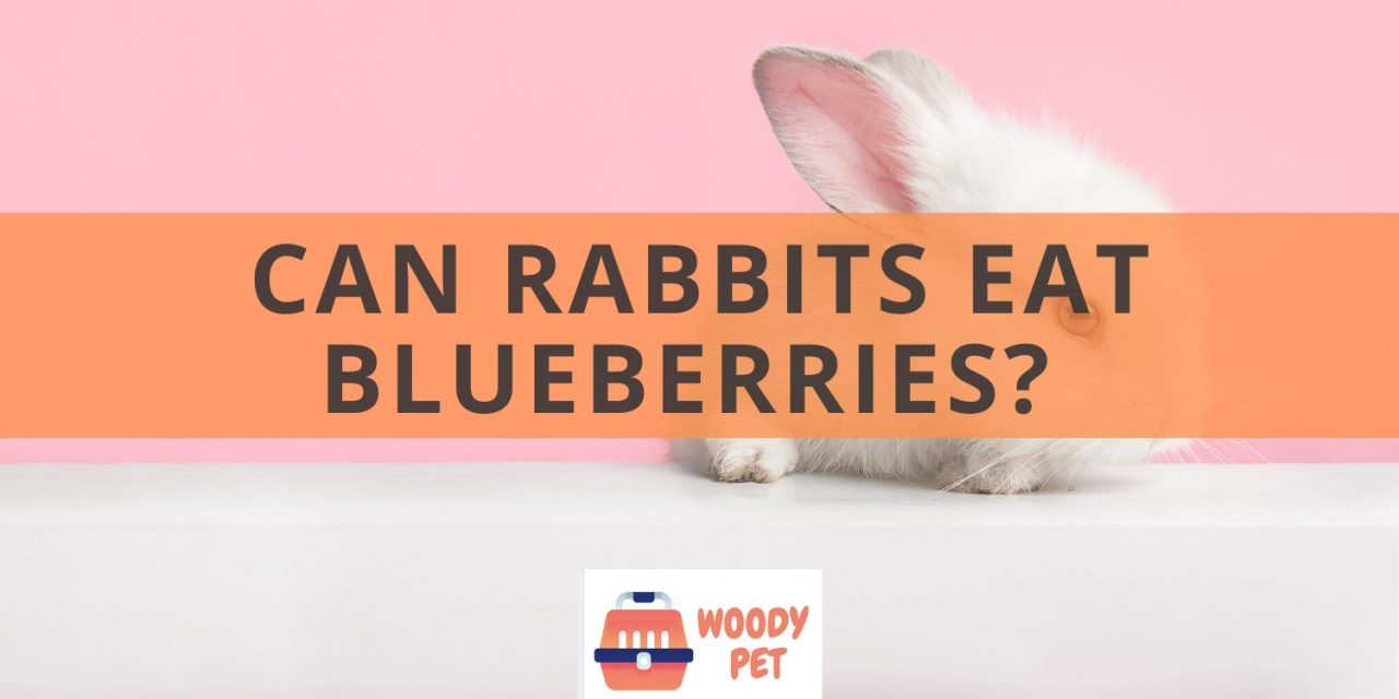 Can Rabbits Eat Blueberries?