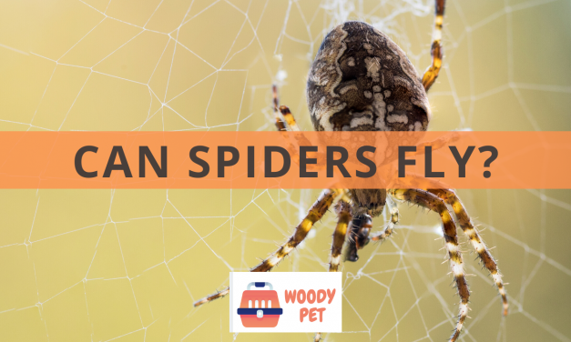 Can Spiders Fly Too?
