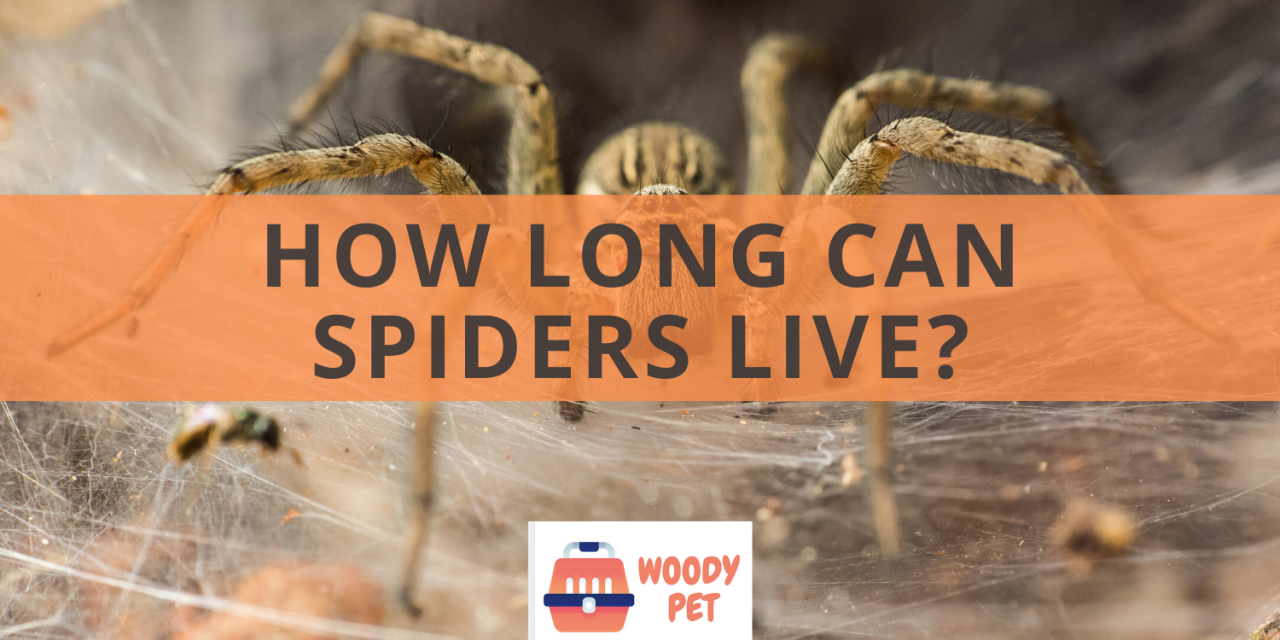 How Long Can Spiders Live?