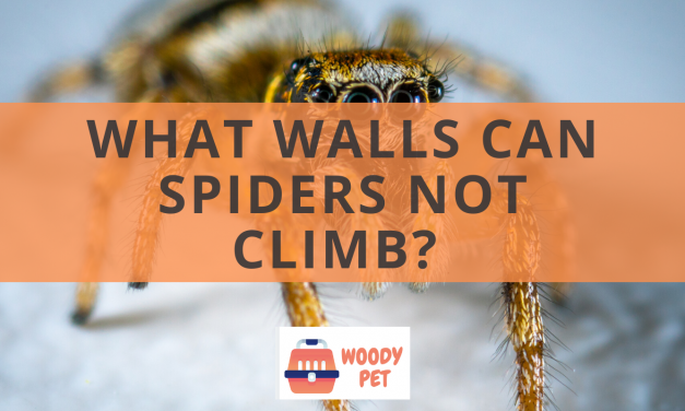 What Walls Can Spiders not Climb?