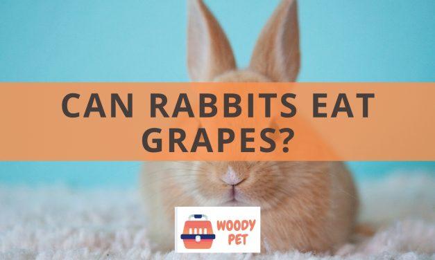 Can Rabbits Eat Grapes?