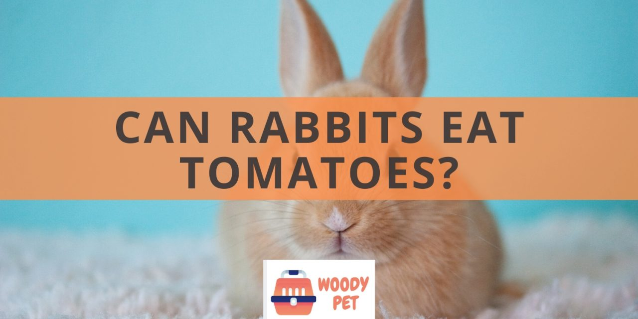 Can Rabbits Eat Tomatoes?