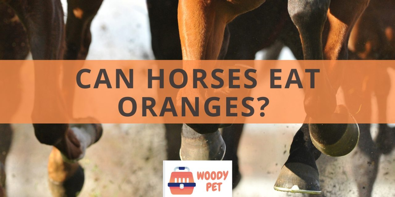 Can horses eat oranges?