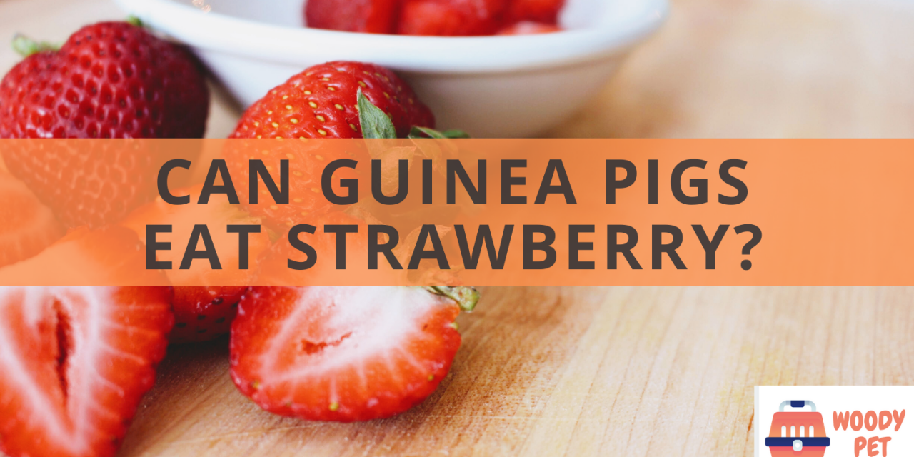 Can guinea pigs eat strawberry?