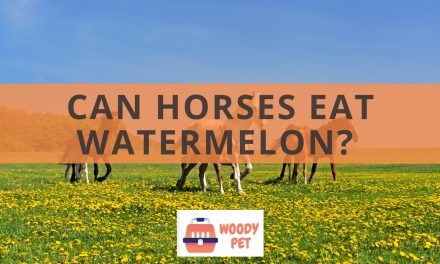Can horses eat watermelon?