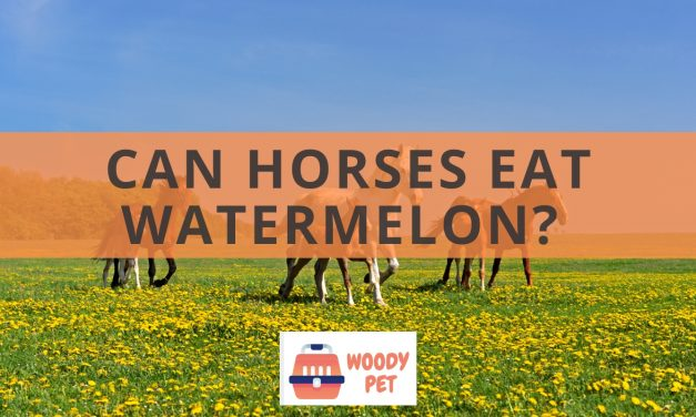 Can horses eat watermelon?