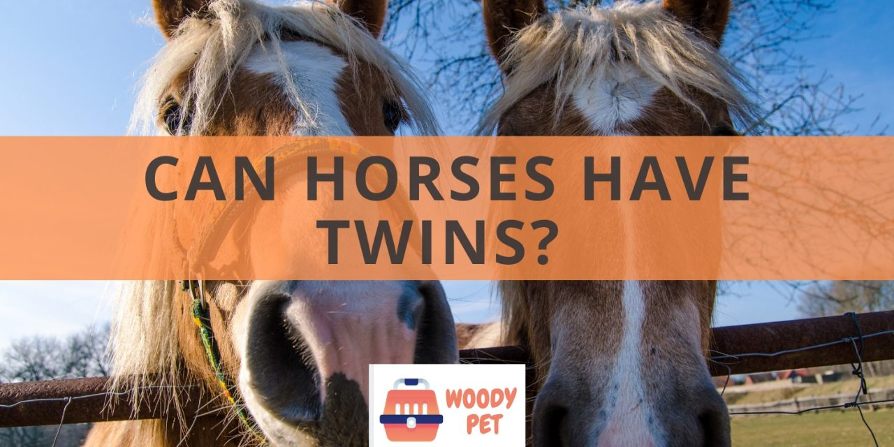 Can horses have twins?