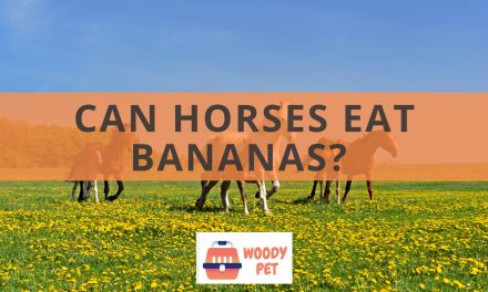 Can horses eat bananas?