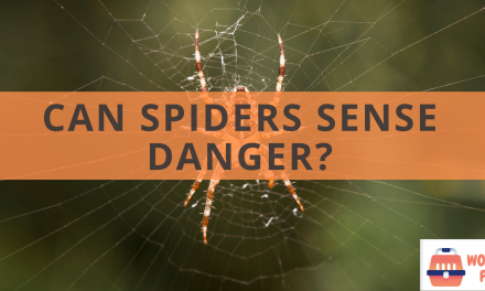 Can spiders sense danger?