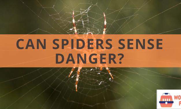 Can spiders sense danger?