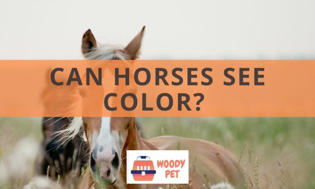 Can horses see color?