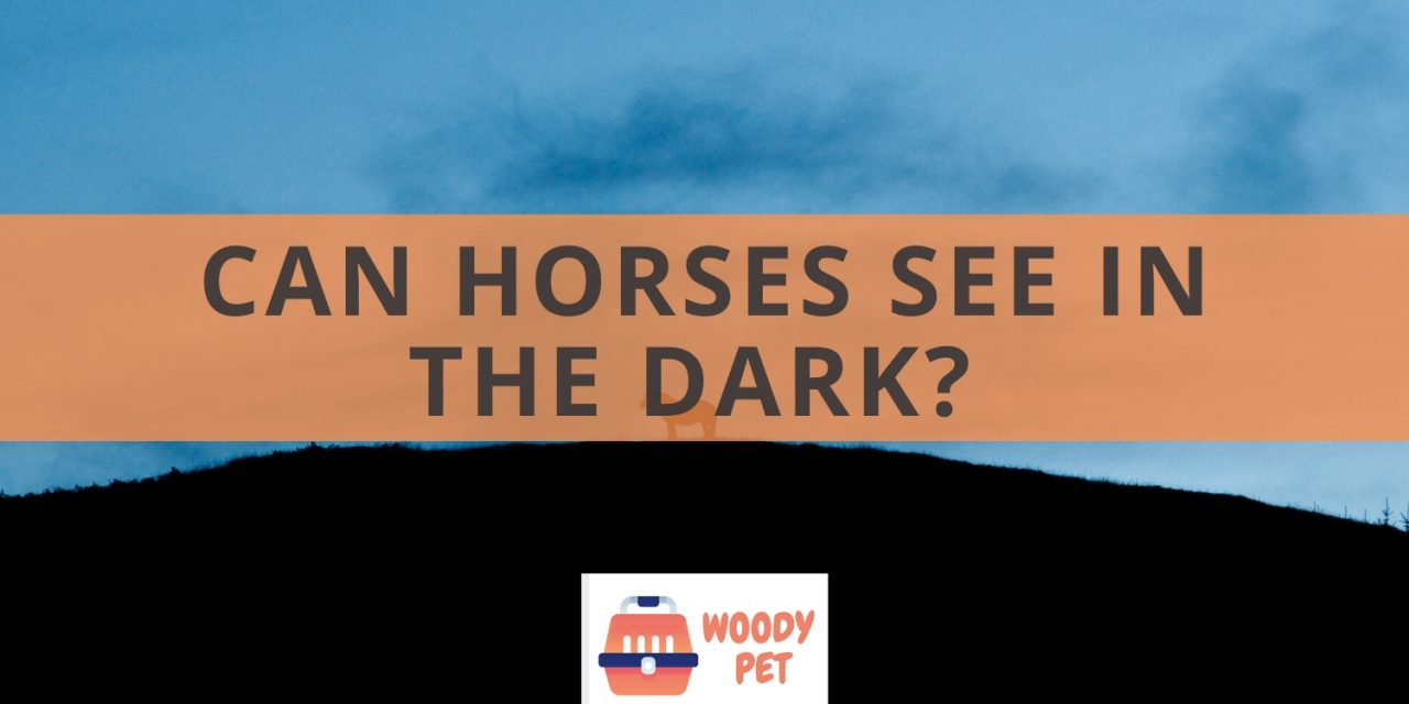 Can horses see in the dark?