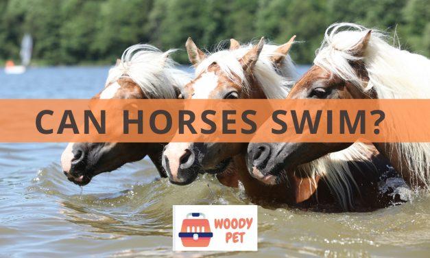 Can horses swim?