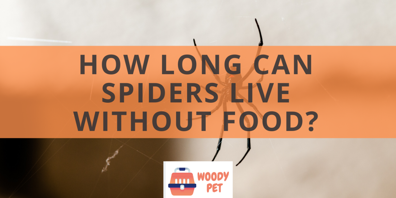 How Long Can Spiders Live Without Food?