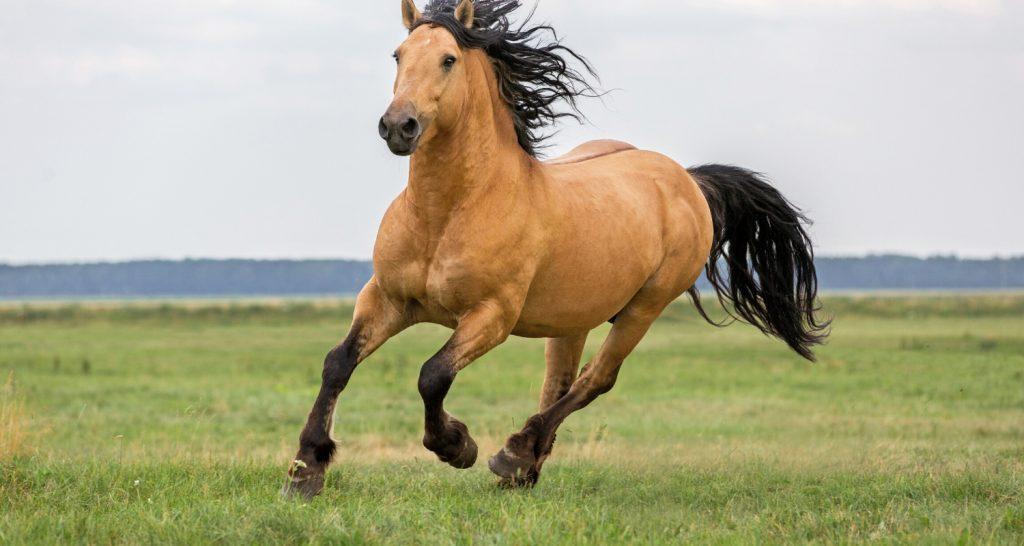 Can horses eat bananas