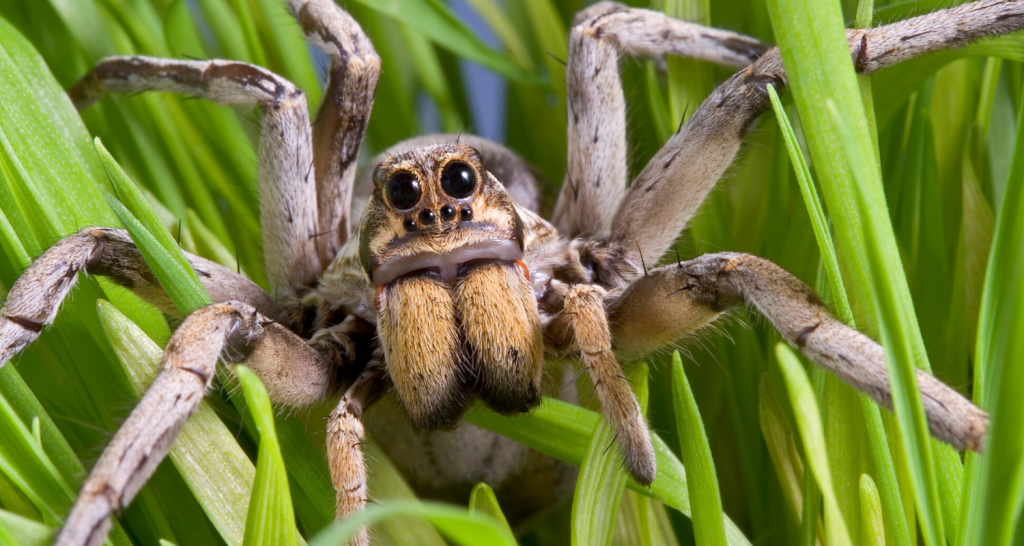 How Long Can Spiders Live