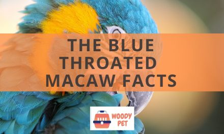 The Blue throated macaw Facts