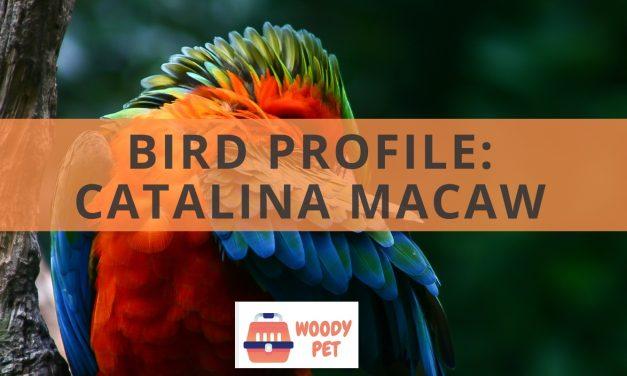 Bird Profile Catalina macaw