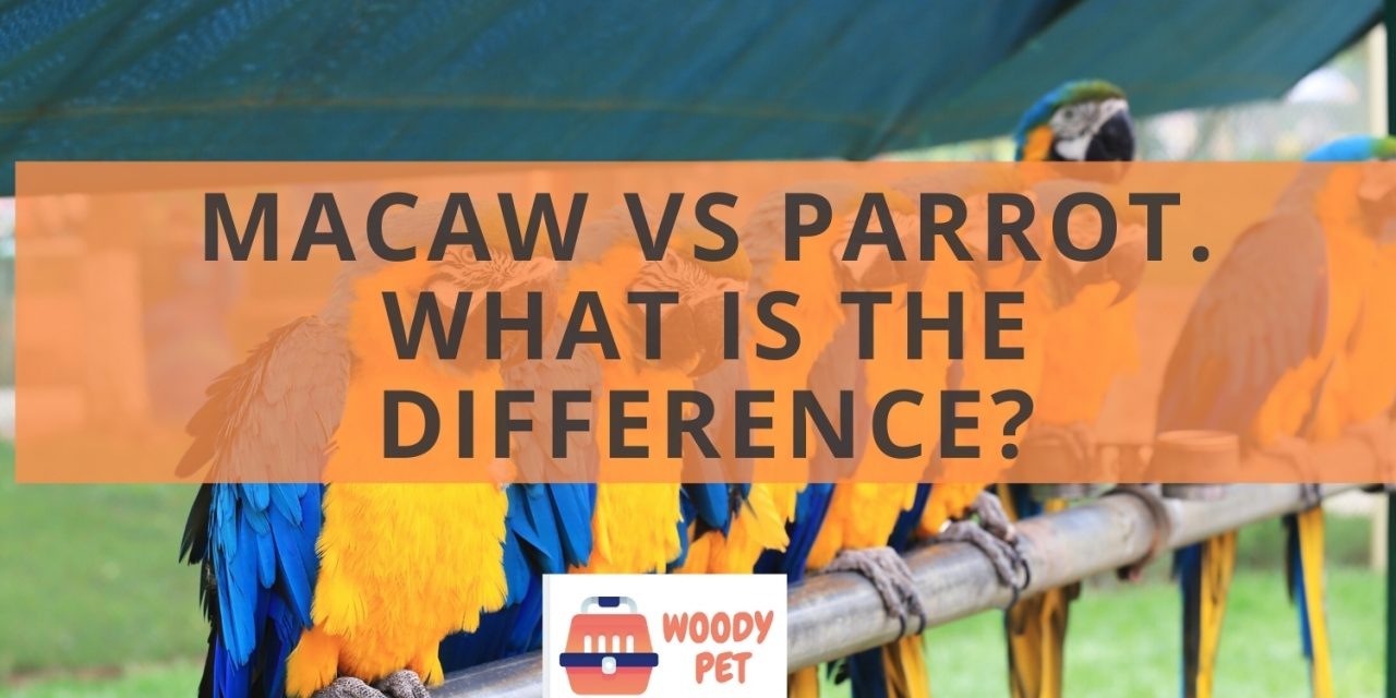 Macaw vs parrot. What is the difference?