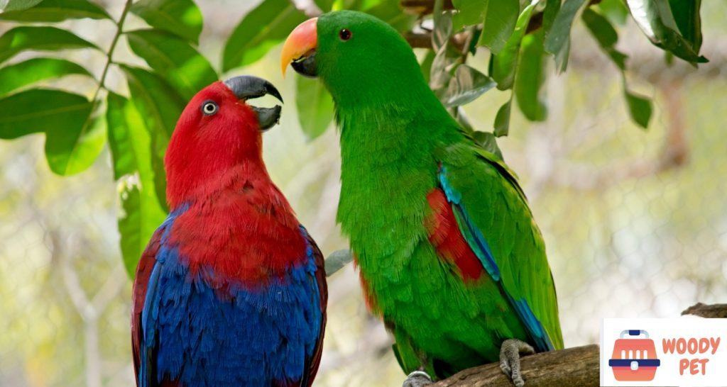 Macaw vs parrot