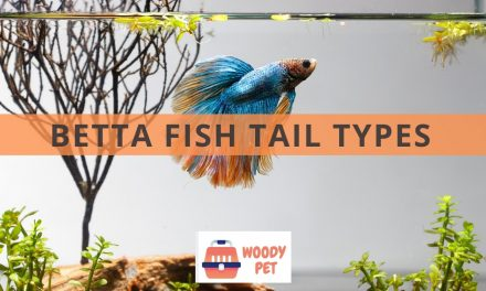 Betta Fish Tail Types