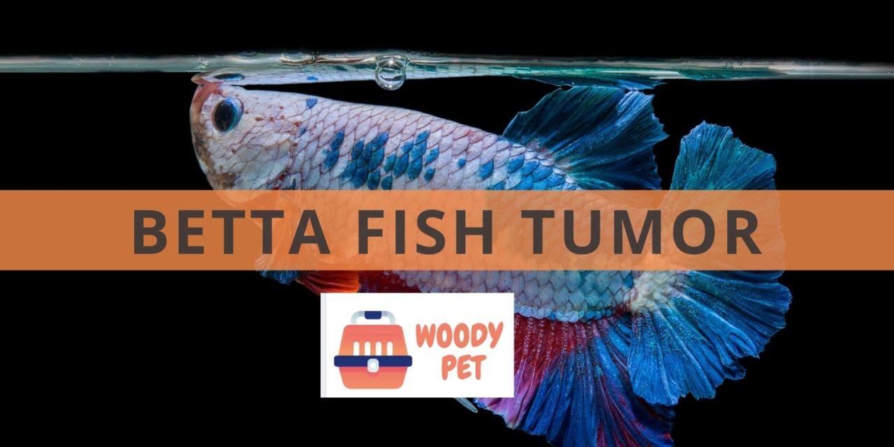 Betta Fish Tumor
