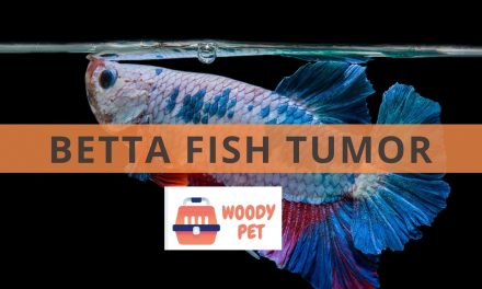 Betta Fish Tumor