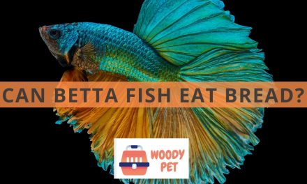 Can Betta Fish Eat Bread?
