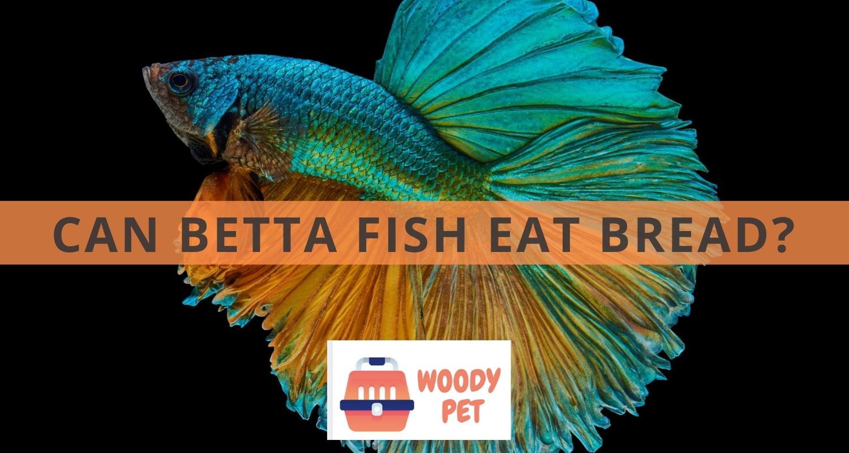 Can Betta Fish Eat Bread