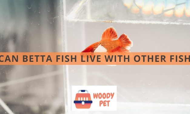 Can Betta Fish Live With Other Fish