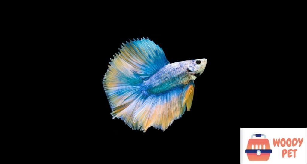 Can Betta Fish Live in Tap Water