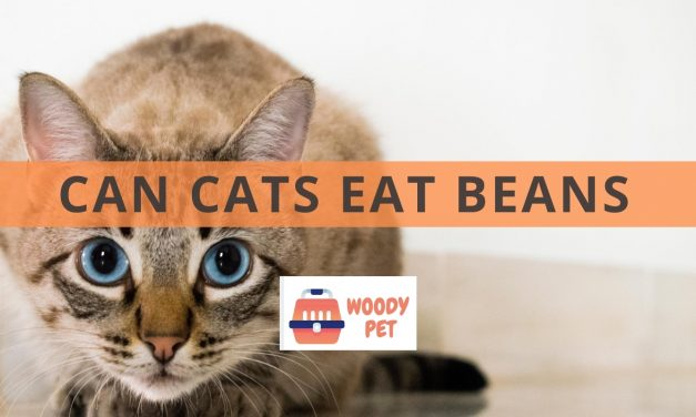 Can Cats Eat Green Beans