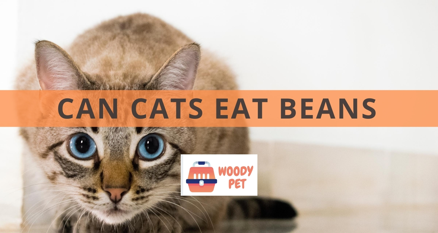 Can Cats Eat Beans