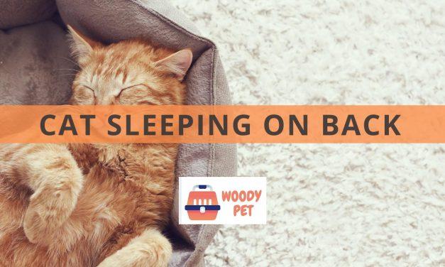 Cat Sleeping on Back