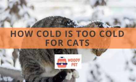 How Cold is Too Cold for Cats