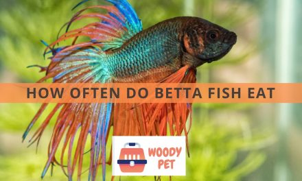 How Often Do Betta Fish Eat