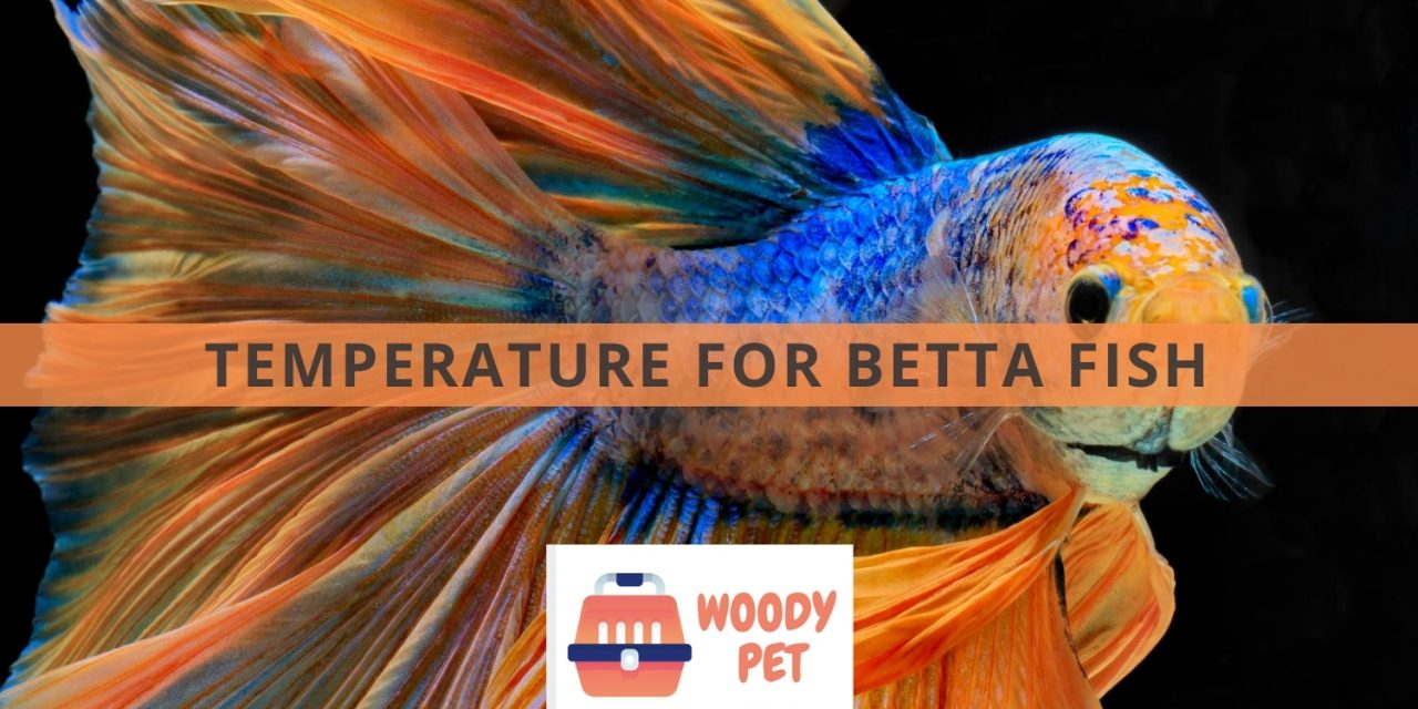 Temperature for Betta fish