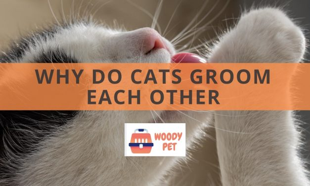 Why Do Cats Lick Each Other