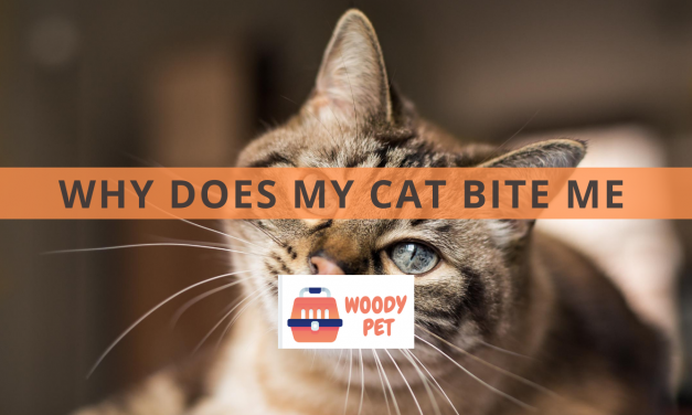 Why Does My Cat Bite Me Unprovoked?