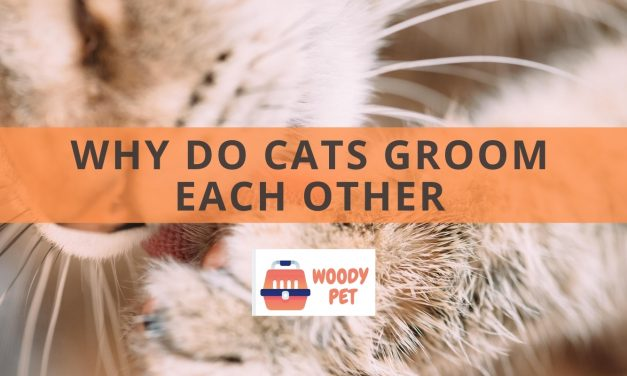 Why do Cats Groom Each Other