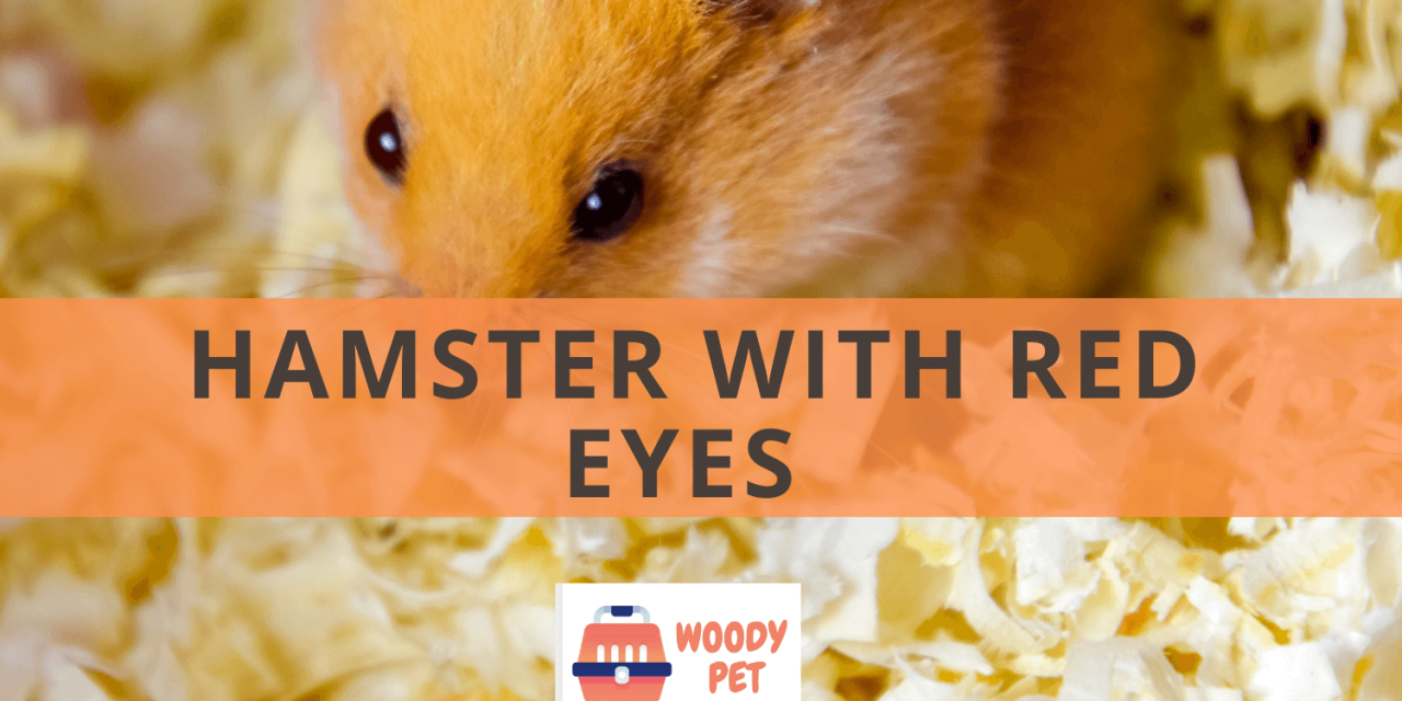 Hamster with Red Eyes.