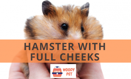 Hamster with Full Cheeks.