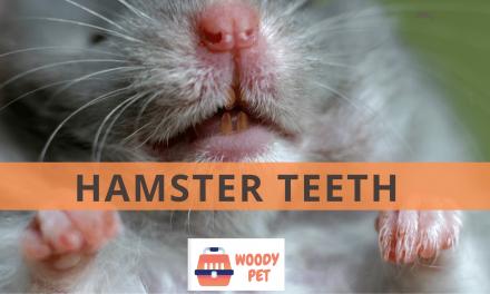 Hamster Teeth